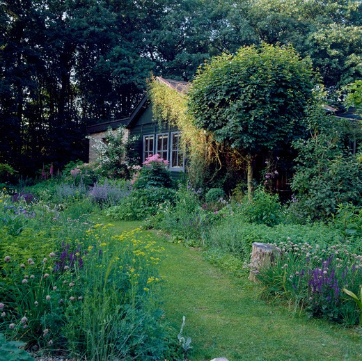 Grass path and herbaceous borders in shadycountry garden in summer : Stock Photo