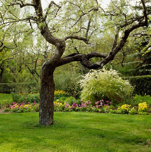 Stock Photo: 4291-9260 Tree on lawn in summer country garden