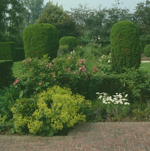 Stock Photo: 4291-9290 Corner of a large country garden with lady's mantle ,roses and clipped yew pillars