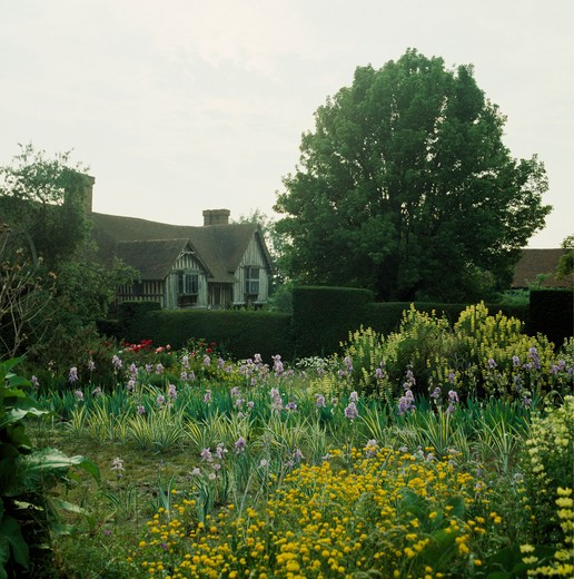Stock Photo: 4291-9706 Spring plants in front of clipped hedge in country garden