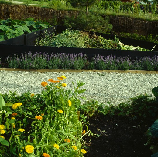 Gravel path through vegetable beds in country garden in summer : Stock Photo