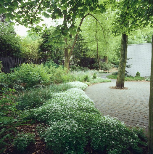 Stock Photo: 4291-9910 Underplanting in large country garden with paving