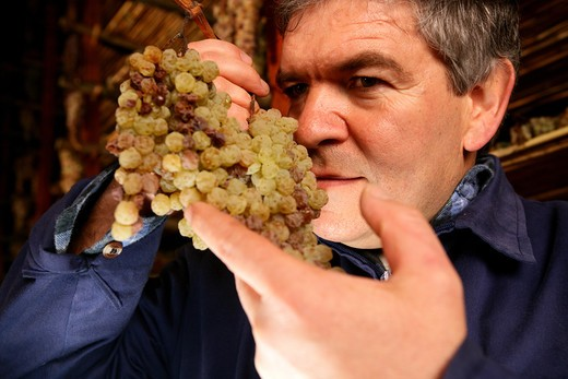 Stock Photo: 4292-100684 Italy, Tuscany, Montepulciano. Man in Vin santo (traditional Tuscan wine made from semi-dried grapes) drying room