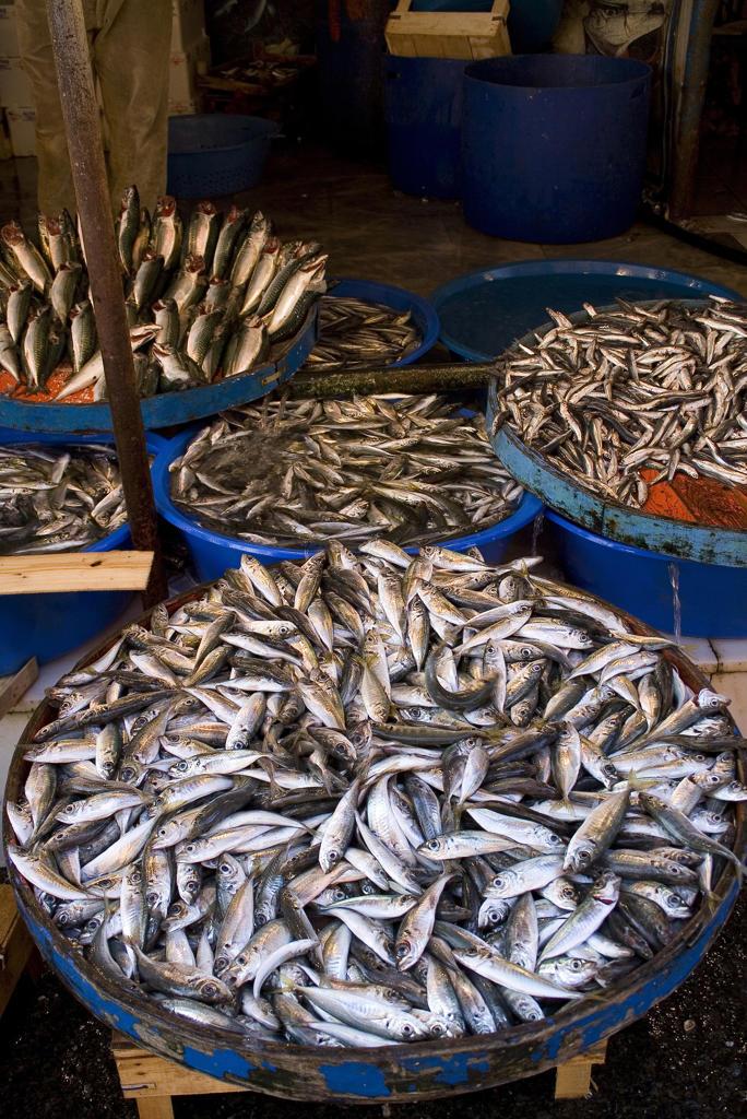 Turkey, Istanbul, Kadikoy fish market : Stock Photo