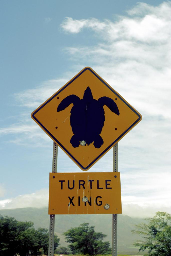 Stock Photo: 4292-107879 USA, Hawaii Island, Maui, Makena, Big Beach, Turtle Sign.