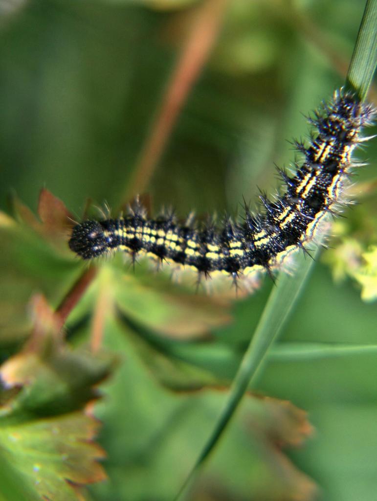 Stock Photo: 4292-108950 Caterpillar