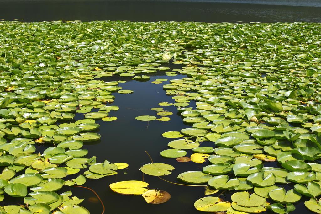 Stock Photo: 4292-11561 Italy, Basilicata, Rionero in Vulture, Monticchio lake