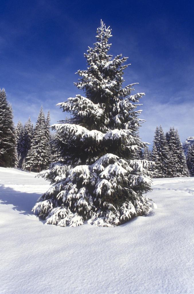Stock Photo: 4292-117523 Winter scene