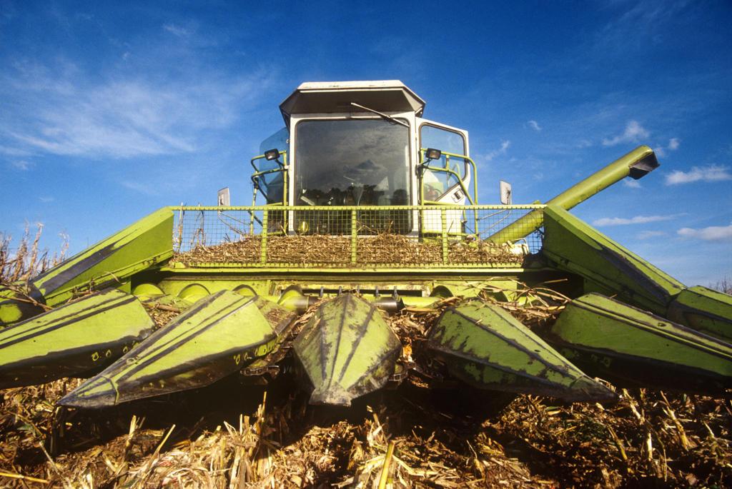 Corn harvesting : Stock Photo