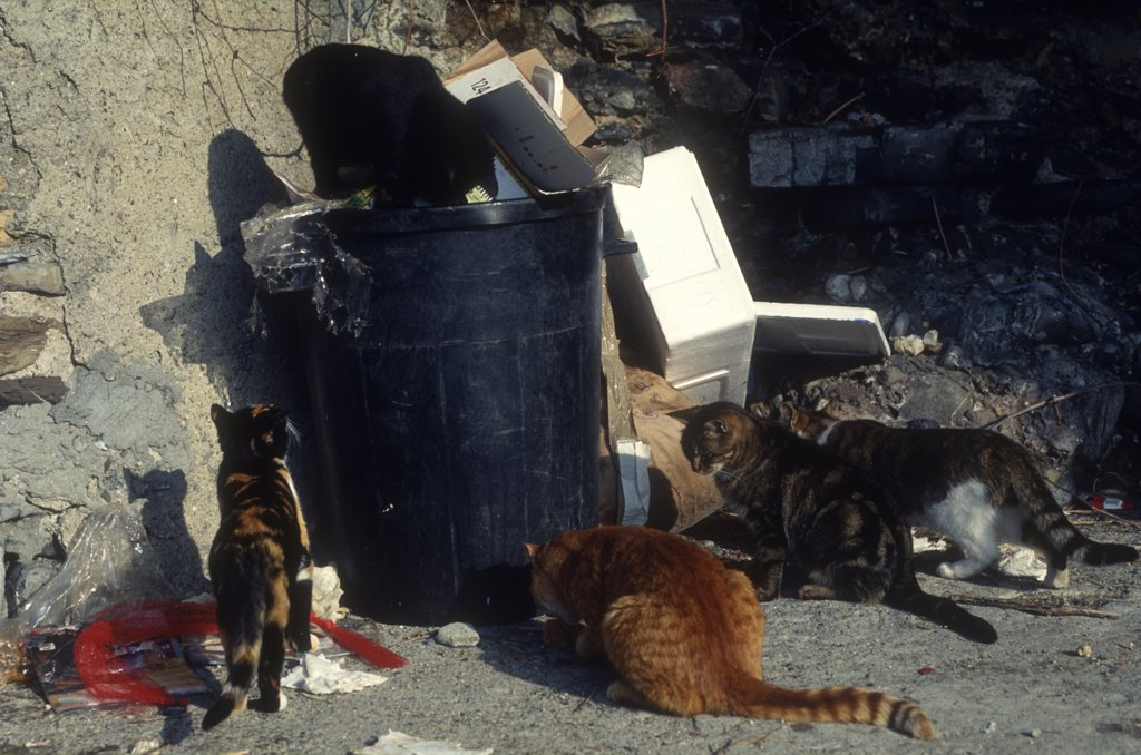 Stray cat near garbage : Stock Photo