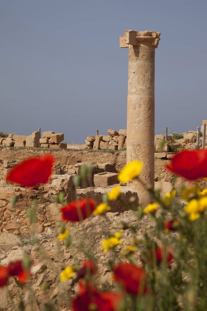 Cyprus, Kato Paphos, Roman Ruins, Roman Pillar and Flowers : Stock Photo