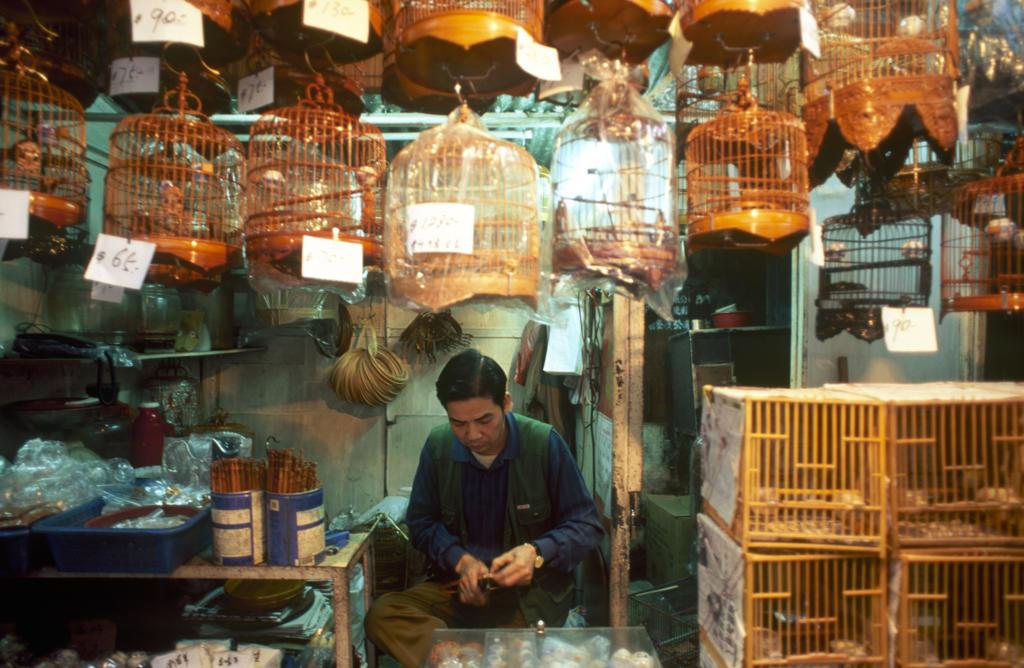 China, Hong Kong, Kowloon, Hong Lok market, birds salesman : Stock Photo