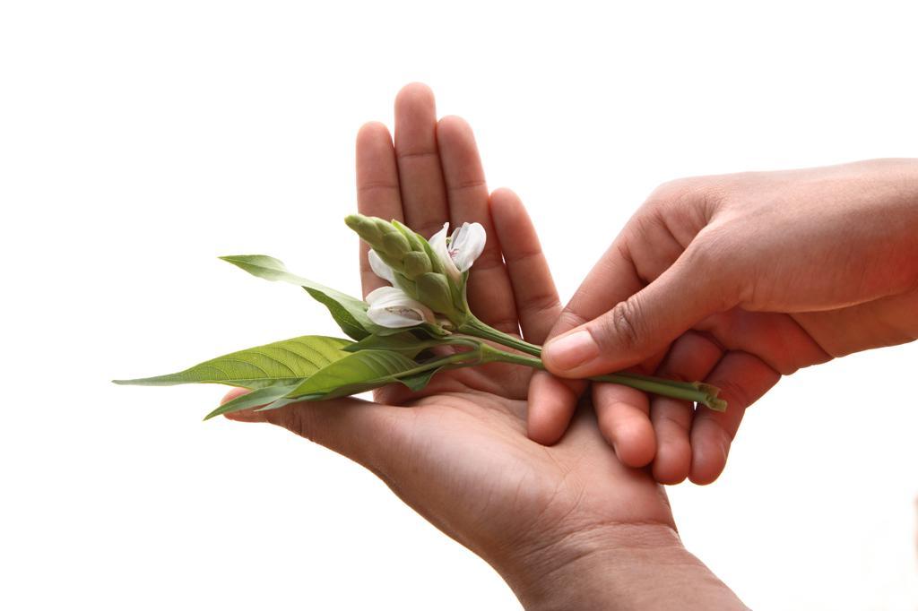 Stock Photo: 4292-137856 Woman's hands holding malabar flower