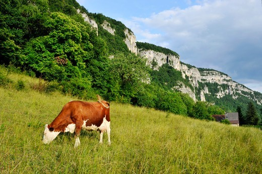 France, Haute-Savoie, Avant Pays Savoyarde, the Chartreuse Natural Park : Stock Photo
