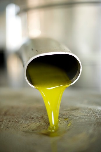 Italy, Apulia, Acaya, Olive oil going out from oil mill : Stock Photo