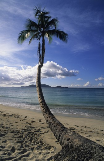 British Virgin Islands, Tortola, Cane Garden Bay : Stock Photo