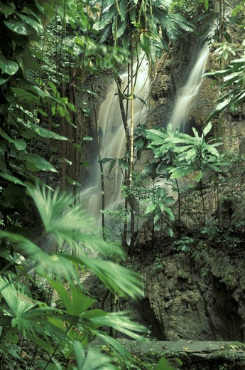 Stock Photo: 4292-33518 Jamaica, Port Antonio, tropical rain forest