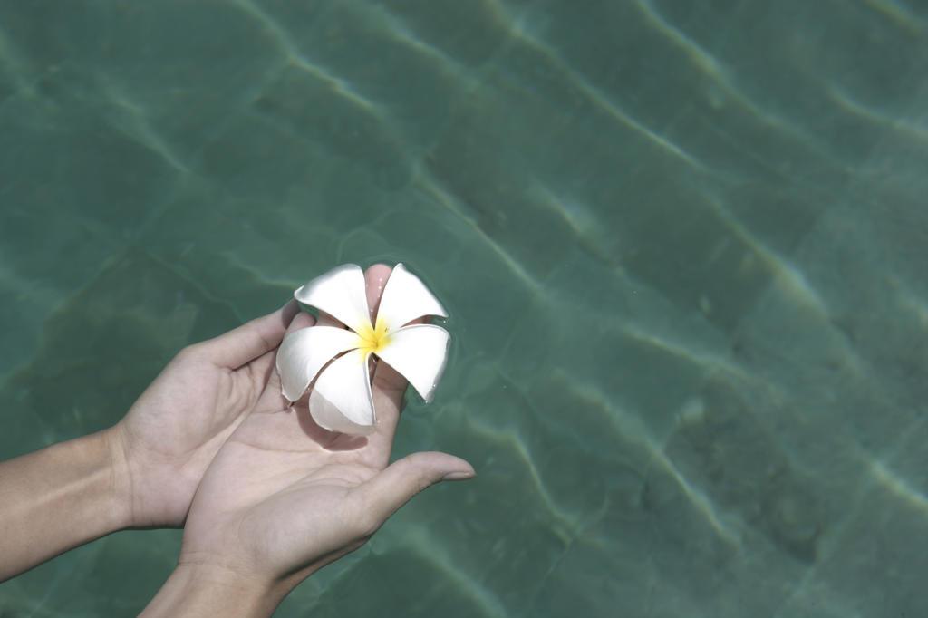 Stock Photo: 4292-35777 Woman's hand holding a frangipane flower