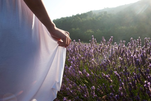 France, Provence. Woman in lavender field : Stock Photo