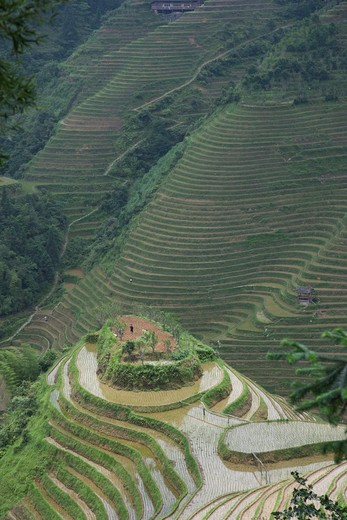 China, Guangxi Province, Guilin, Longsheng terraced ricefields : Stock Photo