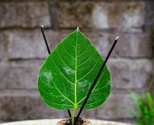 Stock Photo: 4292-41515 Incense sticks and leaf