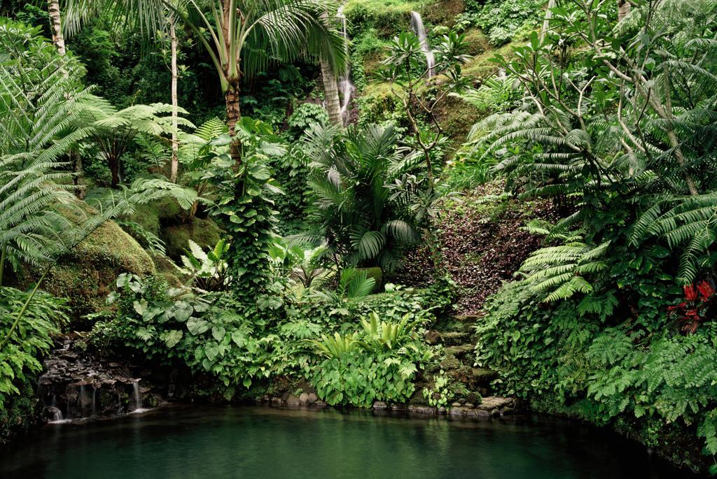 Gardens of Begawan Giri Estate, Ubud, Bali, Indonesia : Stock Photo
