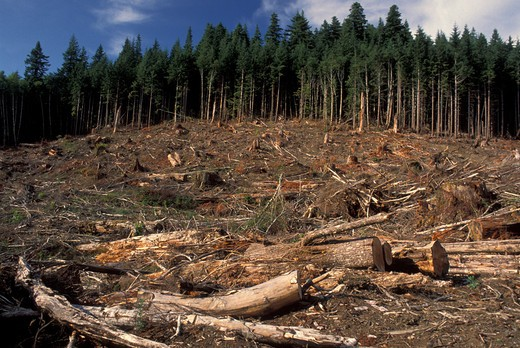 USA, Washington, woods used for timber industry : Stock Photo