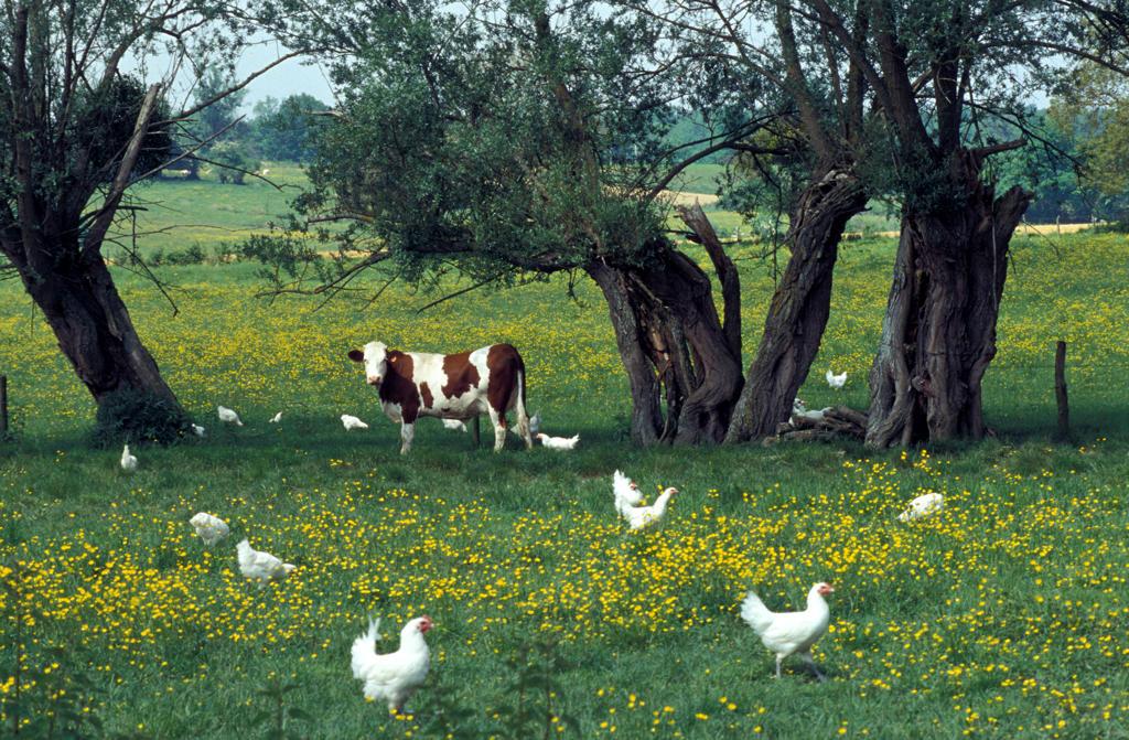 Stock Photo: 4292-51832 France, Lorraine, farm in Bresse