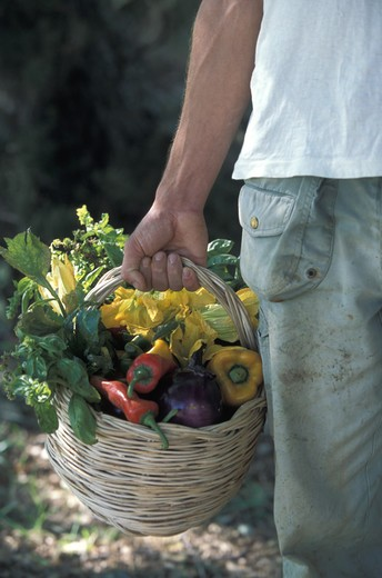Farmer's hand holding a basket with fresh vegetables : Stock Photo