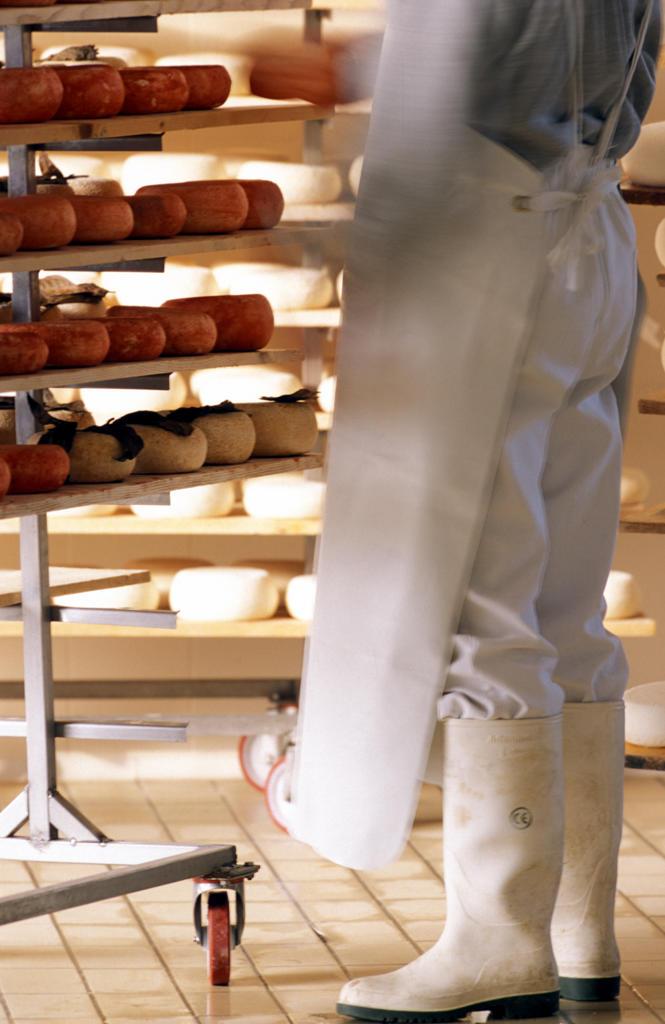 Stock Photo: 4292-52346 Italy, Tuscany. Checking pecorino cheese at St. Polo's farm, Pienza