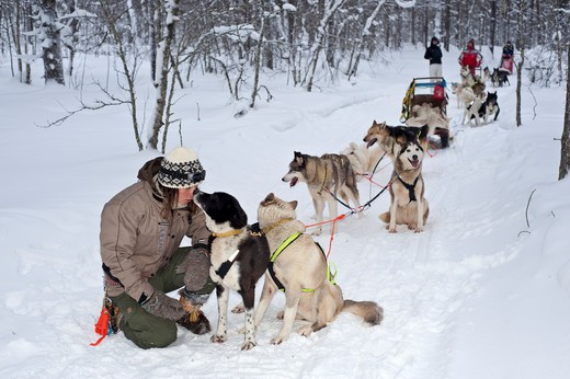Dogsledge in Lapland, Finland : Stock Photo