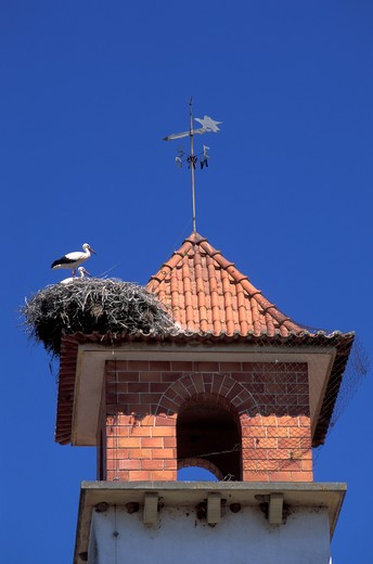 Stock Photo: 4292-58673 Europe, Portugal, Algarve, storks (Ciconia ciconia)roosting on the roof