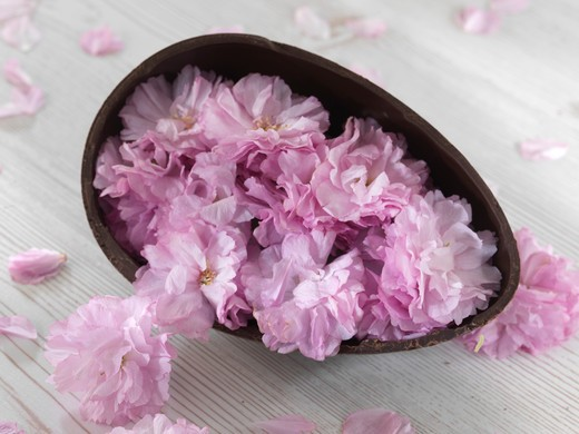 Easter chocolate egg with peony as surprise : Stock Photo