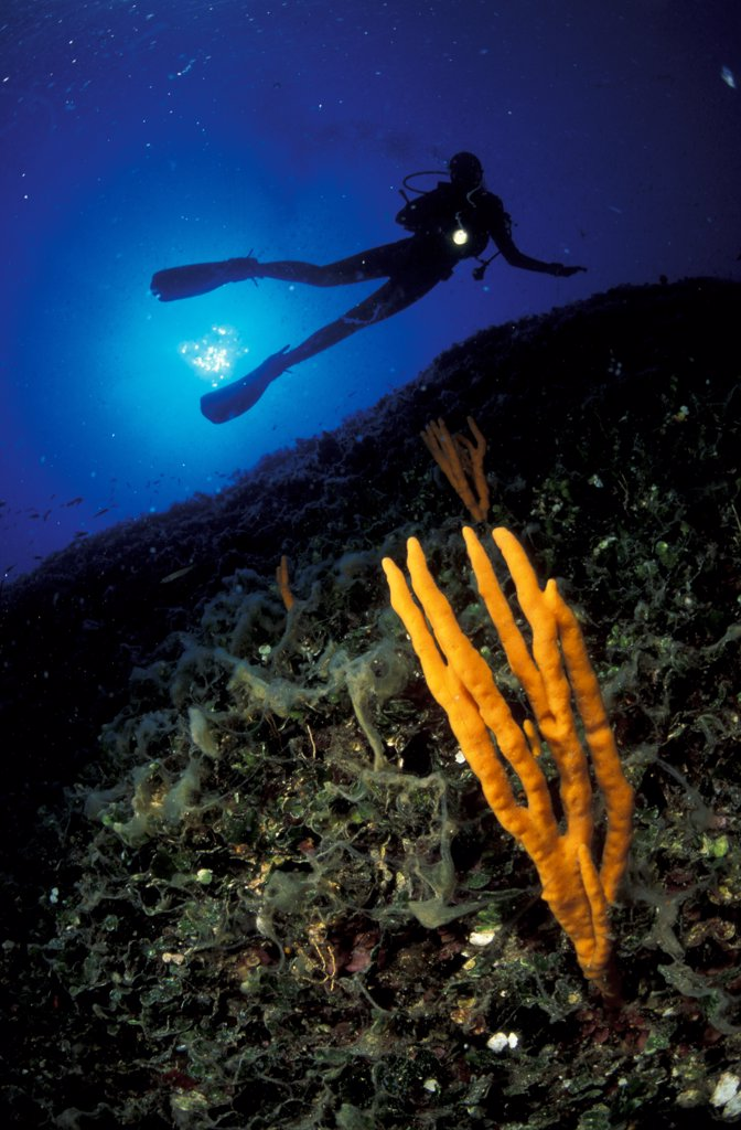 Italy, Aeolian Islands, Lipari, diver exploring seabed : Stock Photo