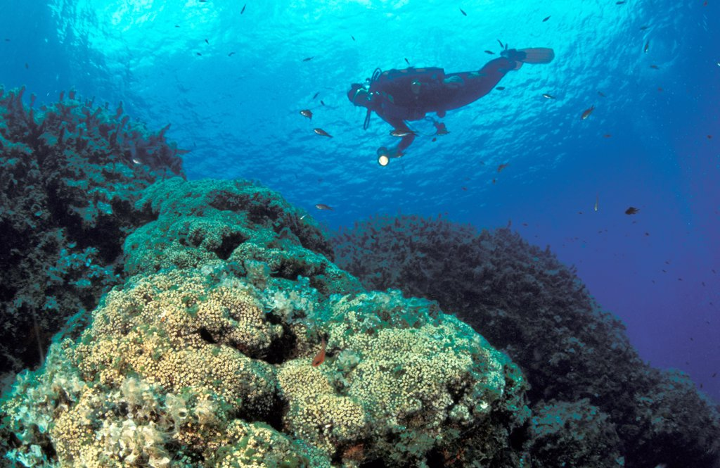 Stock Photo: 4292-61181 Italy, Aeolian Islands, Vulcano island, diver exploring seabed