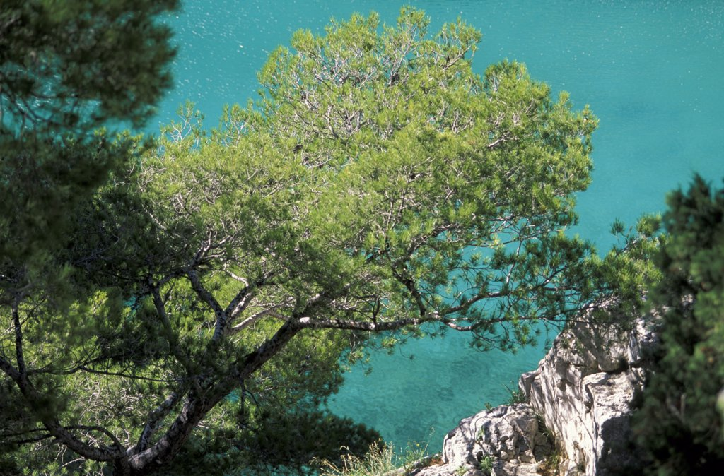 Pine trees on the water in Calanque d'en Vau, southern France : Stock Photo