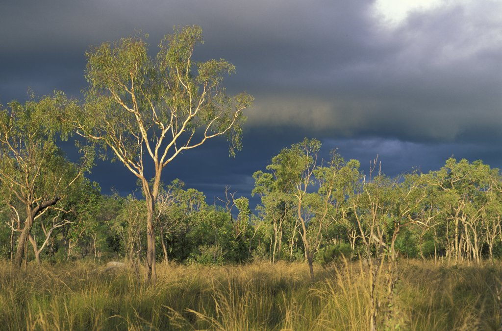 Stock Photo: 4292-61674 Australia, Northern Territory, Ahnmerland National Park