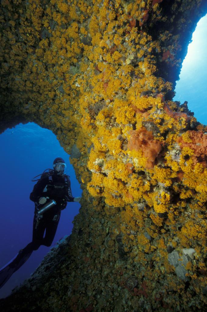 Italy, Sardinia, diver exploring underwater Capo Caccia cave : Stock Photo