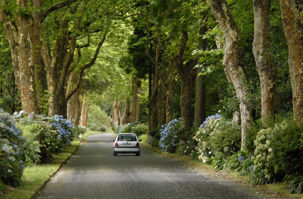 Stock Photo: 4292-77671 Portugal, Azores, Sao Miguel Island, Furnas, treelined road