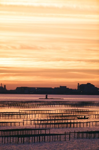 France, Languedoc-Roussillon, Bouzigues, oyster farms at sunset : Stock Photo
