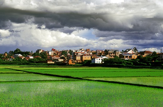 Stock Photo: 4292-83639 Africa, Madagascar, ricefields