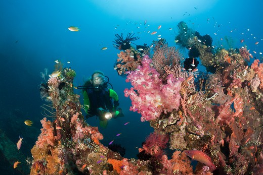 Stock Photo: 4292-86655 Indonesia, Bali, scuba diver exploring coral reef