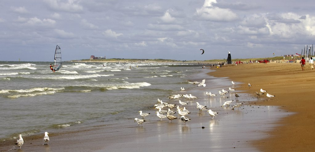 Stock Photo: 4292-92035 Belgium, Flanders, Knokke. Seagulls on beach