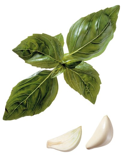 Garlic and basil : Stock Photo