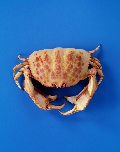 Stock Photo: 4292-96489 Crab