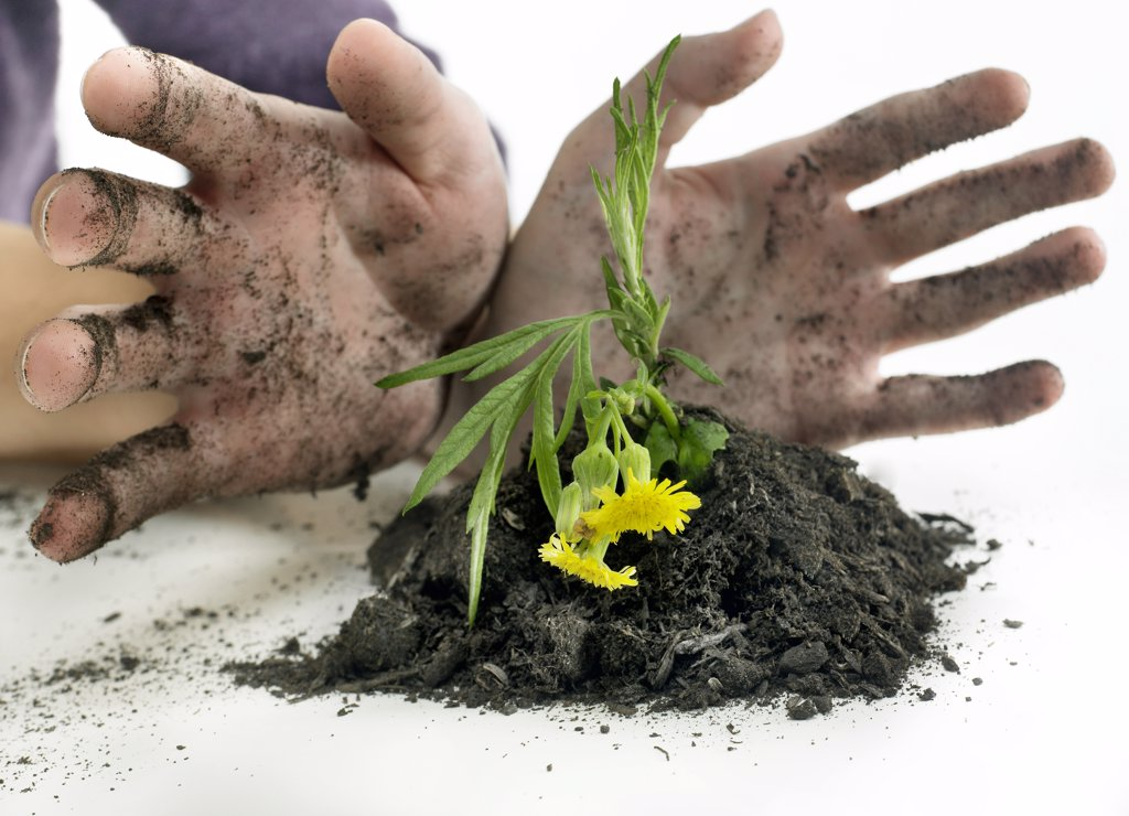 Stock Photo: 4292-96771 Hands holding flower in dirt