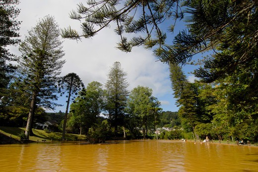 Portugal, Azores, Sao Miguel island, Furnas, Terra Nostra Park, thermal pool surronded by monkey puzzle trees (Araucaria araucana) : Stock Photo