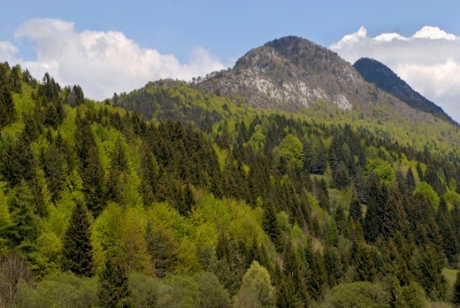 Stock Photo: 4292R-146506 Italy, Trentino, Val di Sella , forest