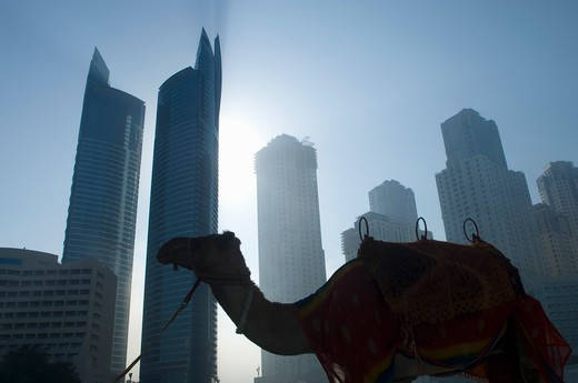 camel standing, towers seen through the mist in the background : Stock Photo