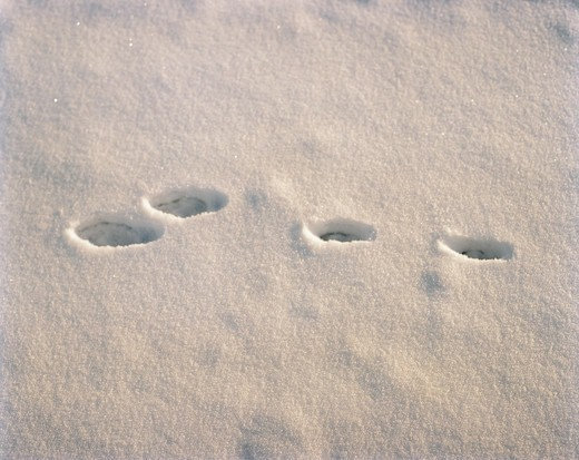 Footprints in the snow. : Stock Photo